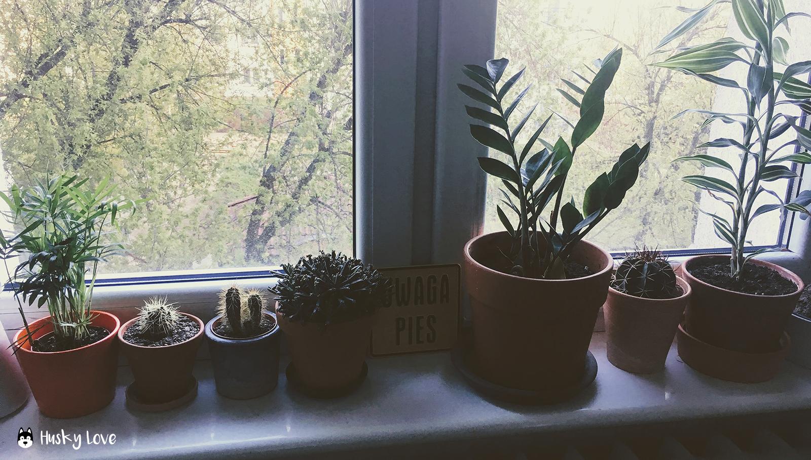 Rośliny W Domu Psiarza